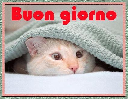 Amorein sms buongiorno mms buonanotte for Buongiorno sms divertenti